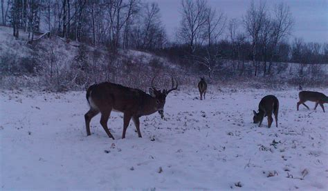 Best Winter Food Plots for Whitetails