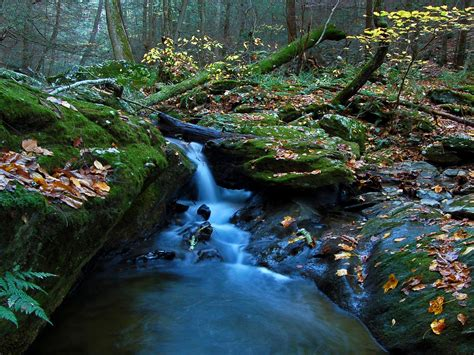 Forest Waterfall Landscape Autumn 2560x1600 : Wallpapers13