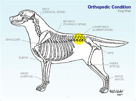 Lower Back - TopDogHealth