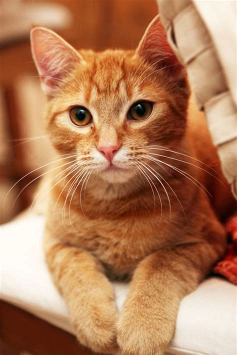 Cute Ginger Cat Pictures - We Need Fun